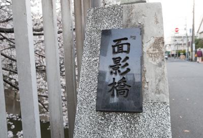 面影橋の桜