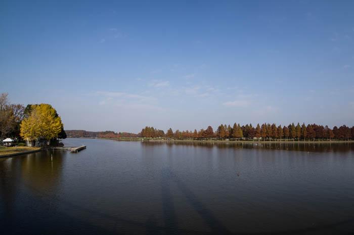 水元公園で紅葉をチラ見してきたっ!