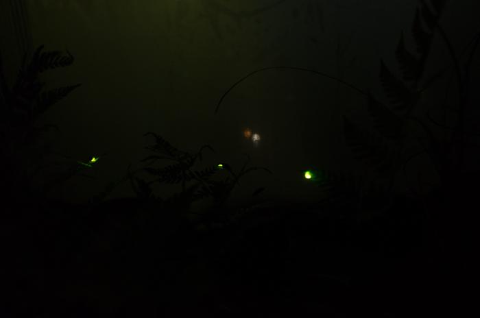 椿山荘ホタル